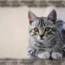 Petit plateau en mélamine cuddly cat