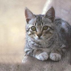 Serviette en papier  cuddly cat