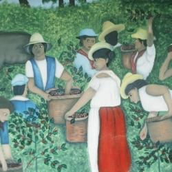 Récolte Café Costa Rica