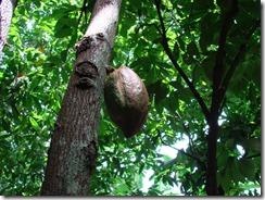AuManoirDesAromes-cacao_branche