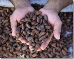 AuManoirDesAromes-cacao_torrefie_grain