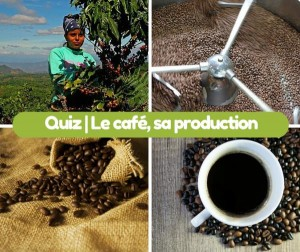 QUIZ sur le cafe et sa production
